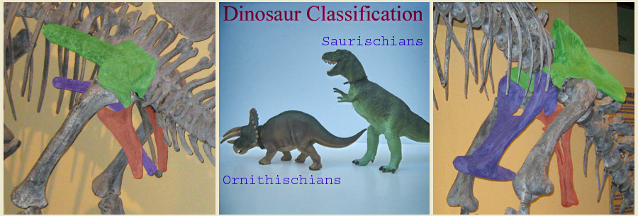 Picture of Ornithischia and Saurischia hips, Models of T-Rex and Triceratops